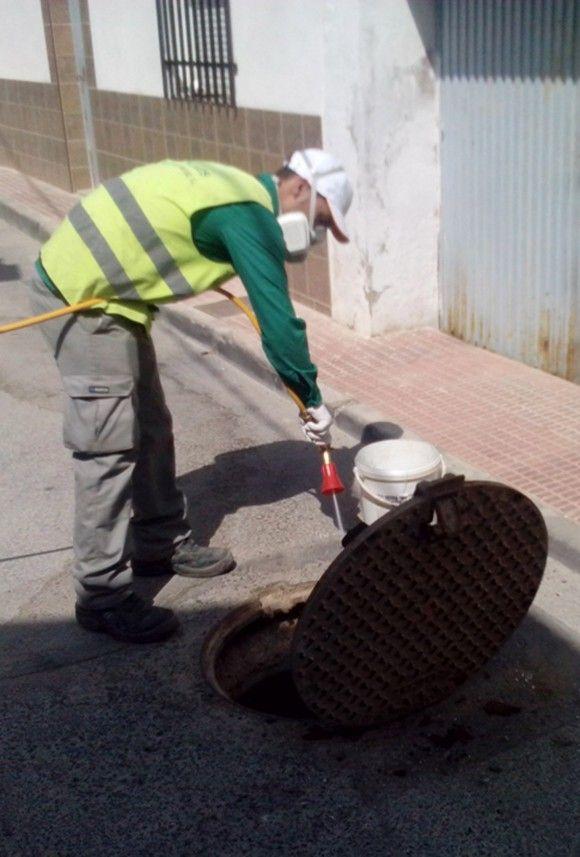 Tratamiento anual de desratización y desinsectación Las Torres de Cotillas e1429620725206
