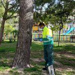 Las Torres de Cotillas combate las plagas de su arbolado con un novedoso sistema de control sostenible3