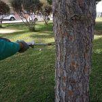 Las Torres de Cotillas combate las plagas de su arbolado con un novedoso sistema de control sostenible4