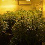 La Policía Local incauta un centenar de plantas de marihuana en un polígono industrial del municipio