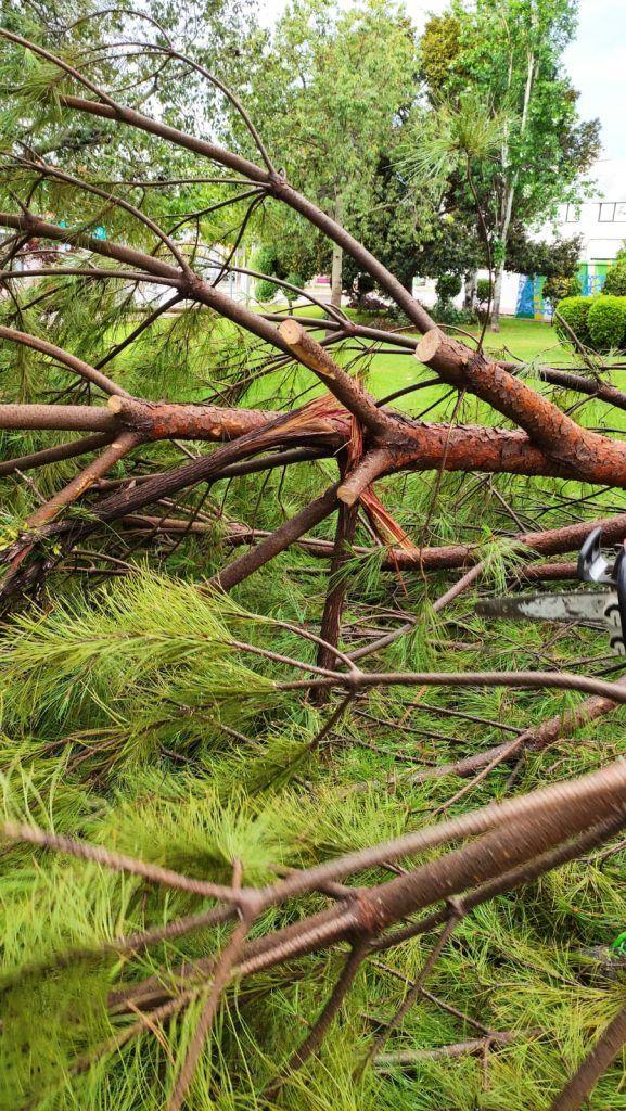 210617 daños lluvia dia 17 de junio 06