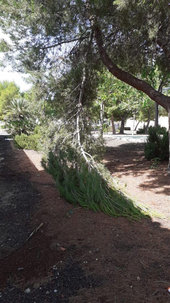 210617 daños lluvia dia 17 de junio 12